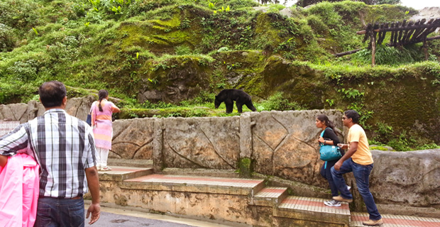 Tourists watching the Himalayan Black Bear in Darjeeling Zoo