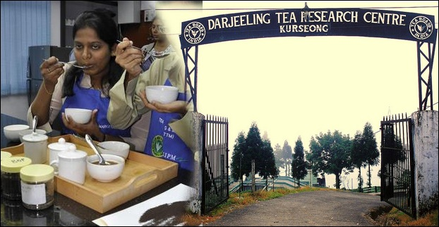 Tea Tasting Institutes offer short term certificateand diploma courses in India