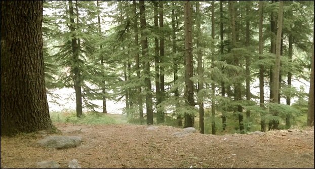 Van Vihar is a forest of Deodar trees  and a must visiting place.