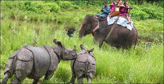 Kaziranga is famous for one horn rhino's