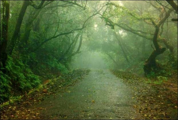 Evergreen Forests is pleasing to the honeymoon couples to Mahabaleshwar