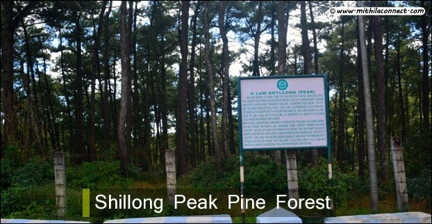 pine_forest_shillong_view_p
