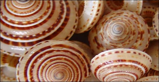 Products made from sea-shells is a popular offering