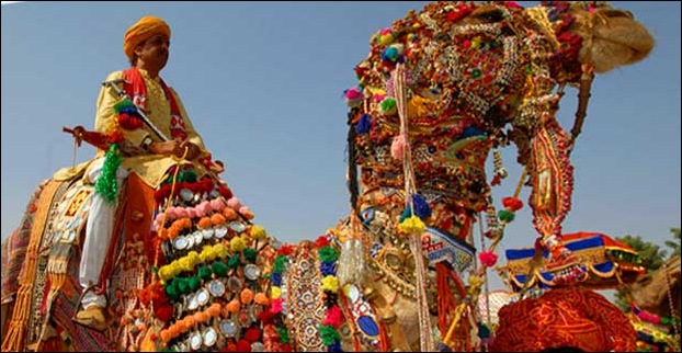 A decorated camel ready for camel festival in Rajasthan